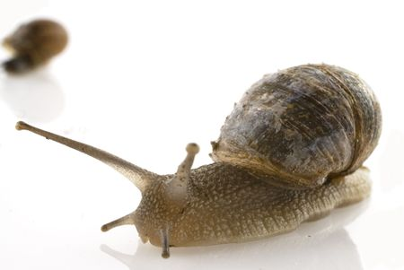 mucus: a slow snail is walking with the house on its back