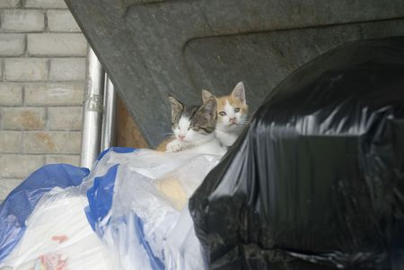 two little alleycats in the garbage photo