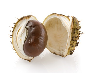 husk: Chestnut seguro en c�scara