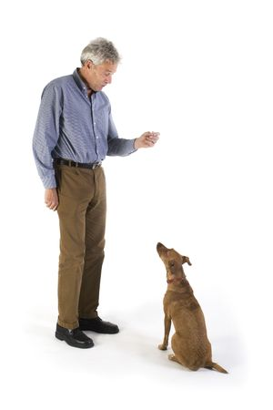 training the little brown dog with rewards photo