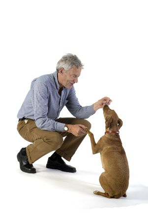 recompense: man is training obedience with little brown dog