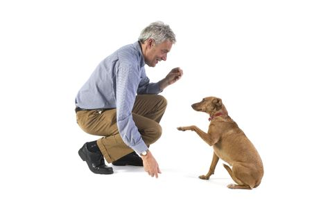 Training obedience by the little brown dog Stock Photo - 1729290