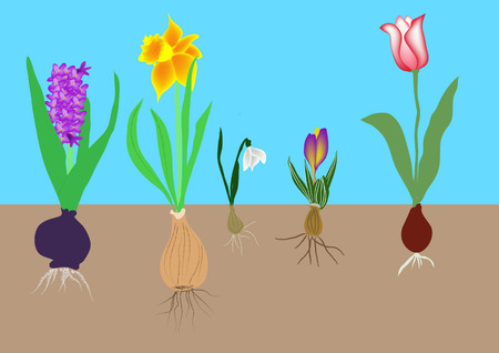 daffodil tulips hyacinth snowdrops and crocus together Vector