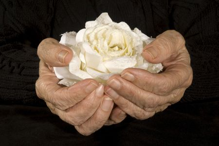 very old hands holding white rose photo
