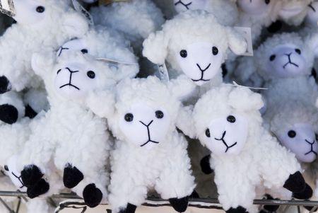 vele schapen om te spelen met