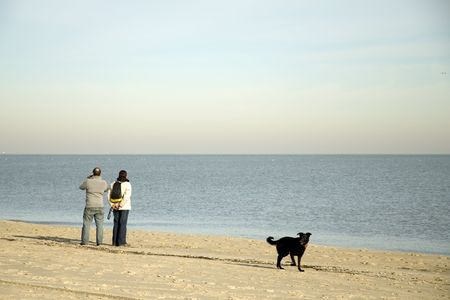 couple is walking the dog at the beach photo