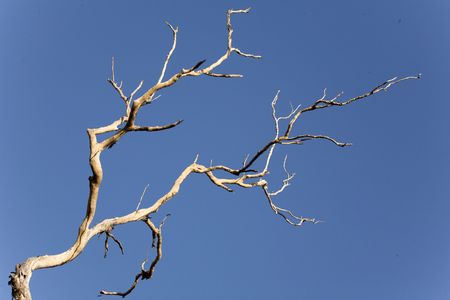 inhospitable: barren tree in inhospitable area Stock Photo