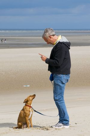 training the dog obedience photo