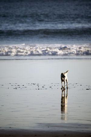 tramping: tramping un perro blanco en la playa