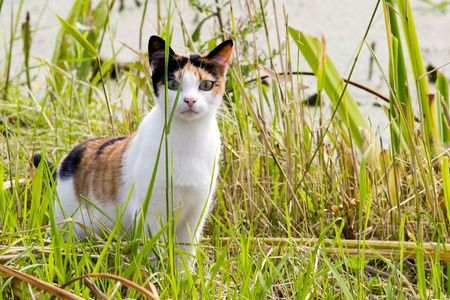 curios: tortoiseshell cat in the grass Stock Photo