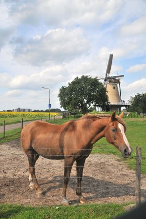 Brown horse in front of a Dutch landscape Stock Photo - 3455427