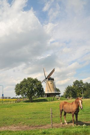 windmill and horse in Dutch landscape Stock Photo - 3455414