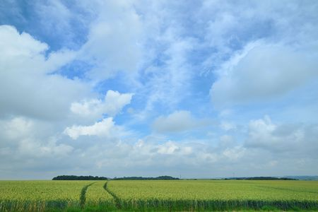 Agriculture with cornfields and cloudy sky photo