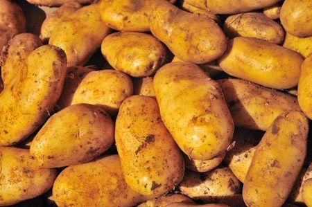 unpeeled: many unpeeled raw potatoes Stock Photo