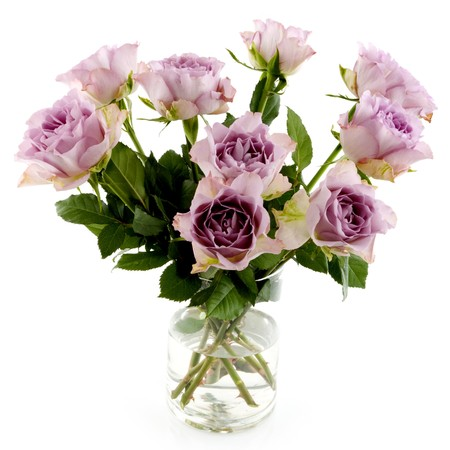 Purple roses isolated over white Stock Photo