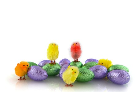 chickens and chocolate eggs for easter  photo