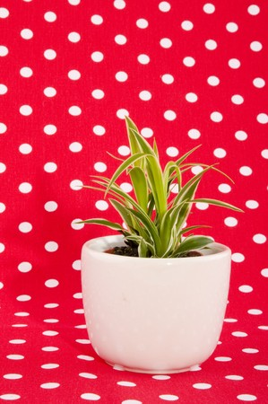 speckles: Green plant on white pot with red speckles background