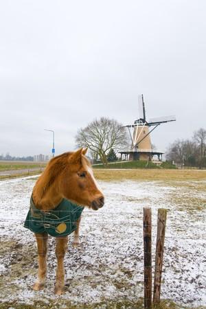 Brown horse in winter Dutch landscape photo