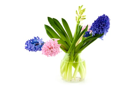 hyacinths: Hyacinths in a glass vase