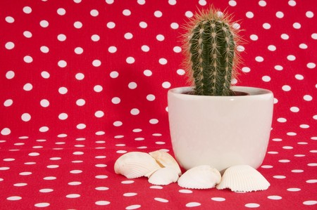 speckles: cactus on red speckles cloth whit shells