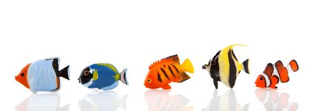 a row of tropical fishes isolated over white Stock Photo - 4585952