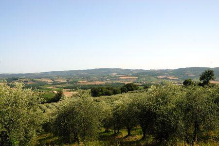 Italiaanse olijven boomgaard in landschap Stockfoto