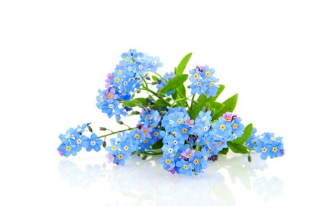 Blue forget me not flowers Stock Photo