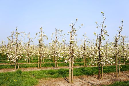 grower: Fruit orchard by a grower