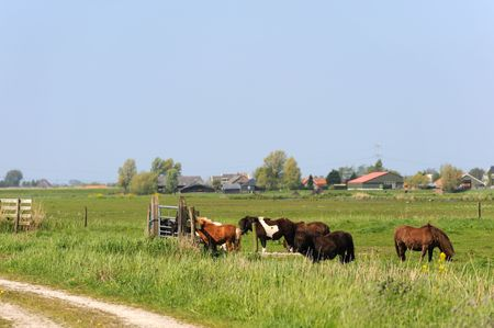 Dutch flat landscape with ponys in the grass fields photo