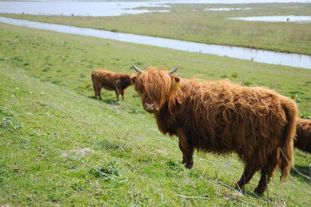 highlander: Highlander escocesa en el r�o el paisaje