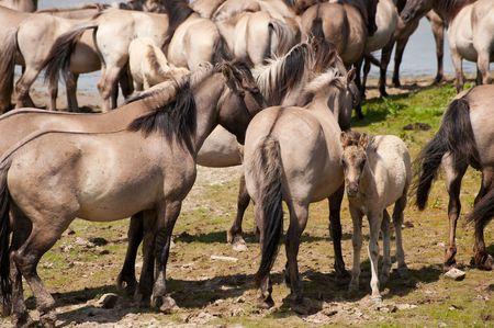 Wild horses in nature landscape  Stock Photo - 5128478