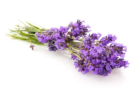 bouquet lavender flowers isolated over white Stock Photo - 5199378