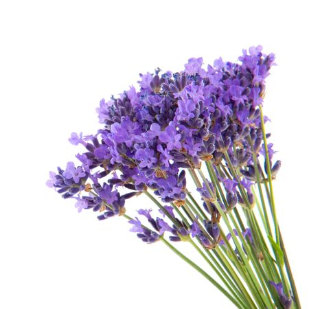 bouquet lavender flowers isolated over white Stock Photo