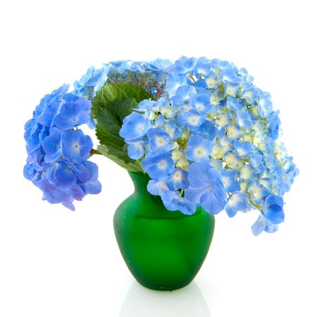 Cheerful bouquet of Hydrangea in vase isolated over white Stock Photo - 5267443