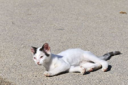 deplorable: Little Greek cat suffering from a disease at the eyes