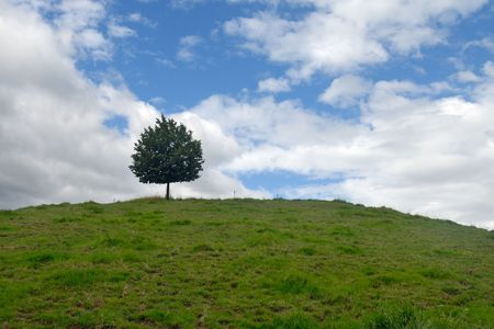 Landscape with lonely tree on the hill