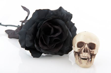 grisly: Halloween black rose and skull isolated over white