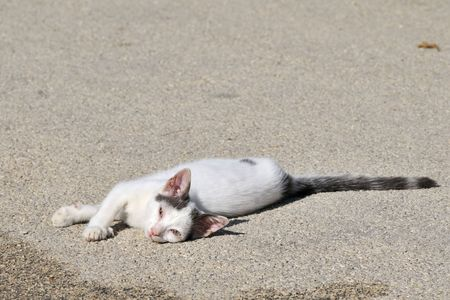 roaming: Little Greek cat suffering from a disease at the eyes