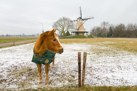 Dutch landscape in winter with horse photo