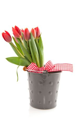 bouquet fresh red tulips with checkered ribbon in bucket photo