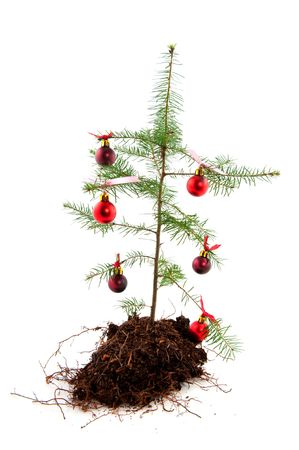 impoverished: Christmas recession with a poor nature tree