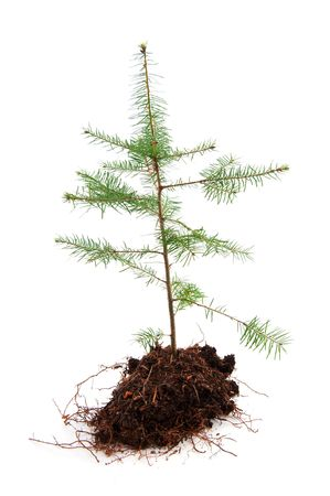 Christmas tree in recession time isolated over white photo