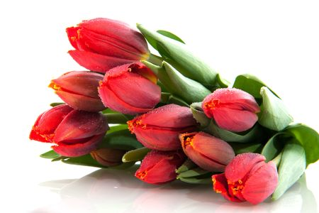 white tulip: Bouquet of red tulips in spring time Stock Photo