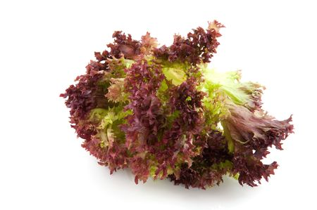 filly: Red Lollo Rosso salad isolated over white Stock Photo
