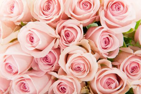 Many pink botanical roses filled as background Stock Photo