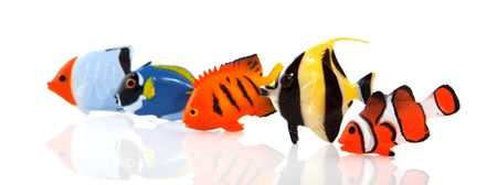 a row of tropical fishes isolated over white Stock Photo
