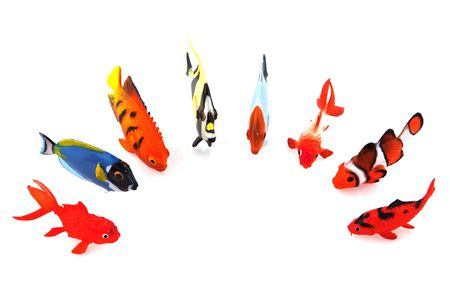 a row of tropical fishes isolated over white photo