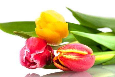bouquet of colorful tulips in spring isolated over white Stock Photo - 6170970