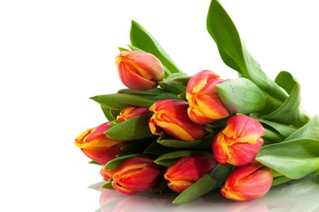 bouquet of colorful tulips in spring isolated over white