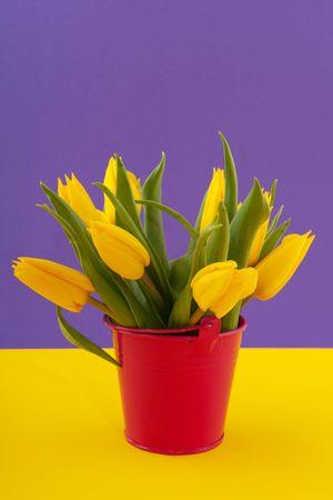 Yellow tulips in orange bucket on purple Stock Photo - 6170798